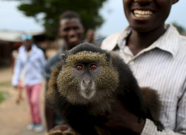 A protester holds a monkey after a protest against Burundi President Pierre Nkurunziza and his bid for a third term in Bujumbura, Burundi, May 25, 2015. (Photo by Goran Tomasevic/Reuters)
