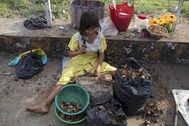 In this Thursday, November 1, 2018, photo, a girl uses a hammer to crack open shells for edible seeds to sell as snacks in Yangon, Myanmar. A United Nations report says some 486 million people are malnourished in Asia and the Pacific, and progress in alleviating hunger is stalling. (Photo by Thein Zaw/AP Photo)