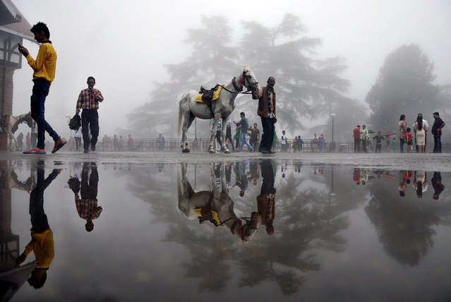 An Indian man walks with a horse past a puddle in the northern hill town of Shimla on July 7, 2015. (Photo by AFP Photo)