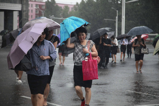 Pedestrians shield themselves from wind and rain brought by Typhoon Lingling Saturday, September 7, 2019, in Pyongyang, North Korea. The typhoon passed along South Korea's coast has toppled trees, grounded planes and caused at least two deaths before making landfall in North Korea. (Photo by Jon Chol Jin/AP Photo)