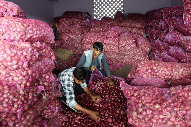 Labourers sort out onions in a shop at a market in Ahmedabad on November 29, 2019. (Photo by Sam Panthaky/AFP Photo)