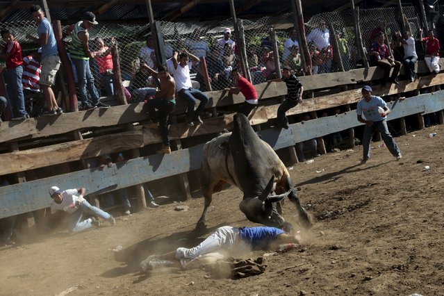 A man is tossed by a bull during festivities honouring the capital's patron saint Santo Domingo de Guzman in Managua, Nicaragua August 2, 2015. (Photo by Oswaldo Rivas/Reuters)