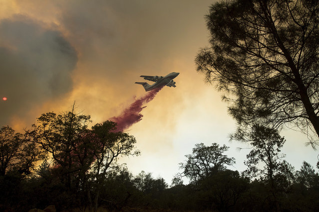 A plane drops retardant while battling a wildfire near Oroville, Calif., on Saturday, July 8, 2017. The fast-moving wildfire in the Sierra Nevada foothills destroyed structures, including homes, and led to several minor injuries, fire officials said Saturday as blazes threatened homes around California during a heat wave. (Photo by Noah Berger/AP Photo)