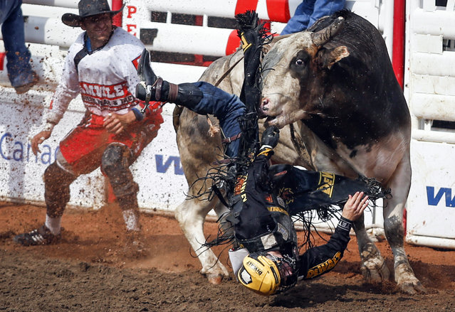 Jess Lockwood, of Volberg, Mont., is bucked off Johnny Gringo during bull riding rodeo finals at the Calgary Stampede in Calgary, Alberta, Sunday, July 16, 2017. (Photo by Jeff McIntosh/The Canadian Press via AP Photo)