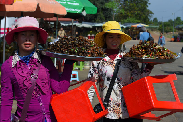 """Cambodian vendors carry fried tarantulas and insects in the town of Skun in Kampong Cham province on December 4, 2019. Tourists and traders flock to Skun in pursuit of the tastiest """"a-ping"""", or Cambodia tarantula, and this dusty town some 75 kms from the capital Phnom Penh is renowned for the beastly treat. (Photo by Tang Chhin Sothy/AFP Photo)"""