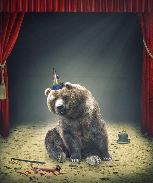 Bear Interrupted. (Photo by Geir Akselsen)