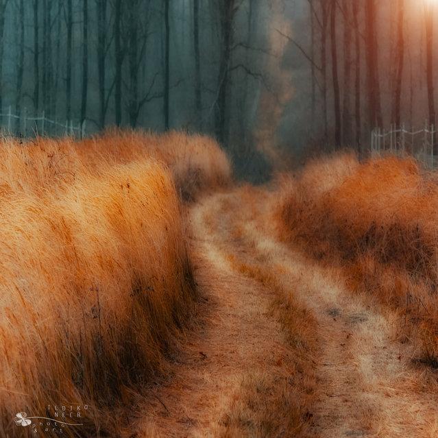 Gold of grass. (Ildiko Neer)