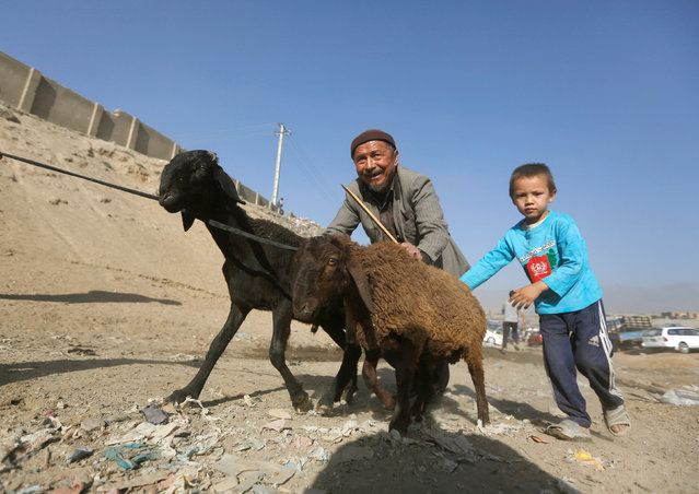 An Afghan man and his son push sheep that they had bought at a livestock market, ahead of the Eid al-Adha, in Kabul, Afghanistan September 9, 2016. (Photo by Omar Sobhani/Reuters)