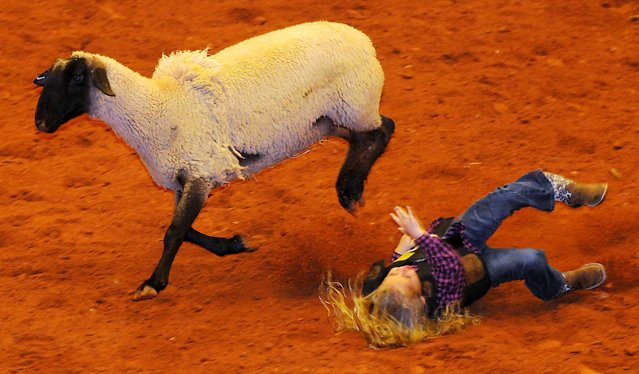 A young mutton buster bites the dust as her sheep sprints away during the Enid PBR Challenge rodeo at the Enid Event Center in Enid, Okla., Saturday, November 8, 2014. (Photo by Bonnie Vculek/AP Photo/Enid News & Eagle)
