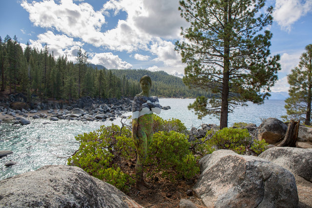 A woman blends into the amazing scenery at Lake Tahoe, US. (Photo by Trina Merry/Caters News)