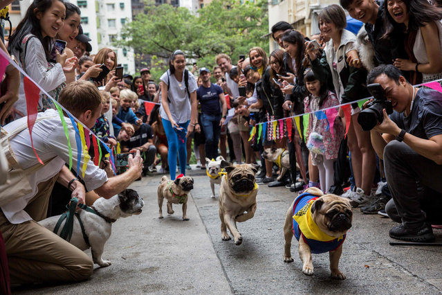 "Owners and their dogs take part in ""HK Doggie Dash 2018"", an event held to raise money for for abandoned and surrendered dogs in Hong Kong on April 15, 2018. Dozens of pugs and dachshunds compensated for their modest speed with peppy spirits at Hong Kong's inaugural ""doggie dash"" on April 15 that raised funds and awareness for the city's abandoned and rescued dogs. (Photo by Isaac Lawrence/AFP Photo)"