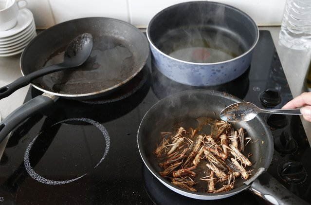 Locusts are cooked with olive oil for a discovery lunch in Brussels September 20, 2012. (Photo by Francois Lenoir/Reuters)