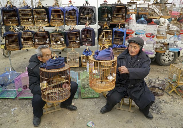 Vendors wait to sell caged birds at a market selling pet birds in Juancheng, Shandong province January 28, 2015. (Photo by Reuters/Stringer)