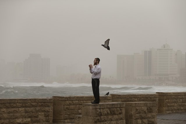 An Ultra-Orthodox Jewish man watches high waves during a sandstorm in Tel Aviv, Israel, Wednesday, February 11, 2015. A sandstorm dumping North African dust on parts of the Middle East roared into Israel and Lebanon on Wednesday, causing the worst Israeli air pollution in years and sending powerful waves into Beirut's famed corniche along the Mediterranean. (Photo by Oded Balilty/AP Photo)