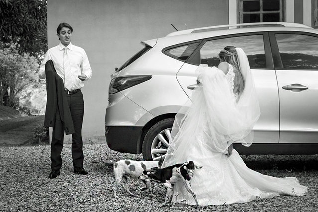 Dog pees on wifes dress. (Photo by Vinicius Matos/Caters News Agency/ISPWP)