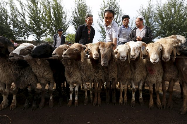 Ethnic Uighur customers select goats at a fair on a street in Aksu, Xinjiang Uighur Autonomous Region in this July 21, 2013 file photo. (Photo by William Hong/Reuters)