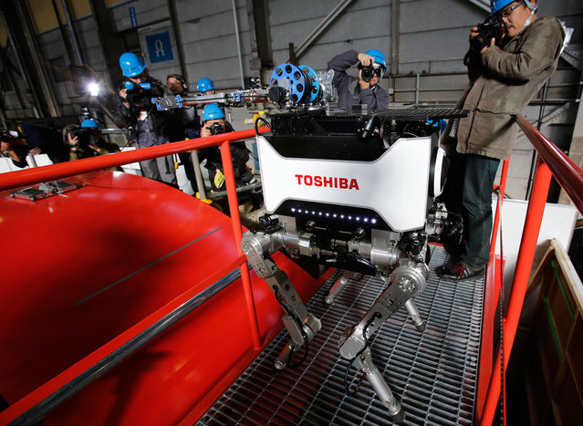 Photographers take photos of Toshiba Corp's new four-legged robot which the company says is capable of carrying out investigative and recovery work at tsunami-crippled Fukushima Daiichi nuclear power plant during a demonstration at the company's Yokohama complex in Yokohama, on November 21, 2012. The new tetrapod robot, which is able to walk on uneven surfaces, avoid obstacles and climb stairs, integrates a camera and dosimeter and is able to investigate the condition of nuclear power plants by remote-controlled operation. (Photo by Yuriko Nakao/Reuters)