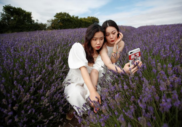 Women pose for a selfie in a lavender field at Hitchin Lavender farm in Ickleford, Britain, August 4, 2020. (Photo by Peter Cziborra/Reuters)
