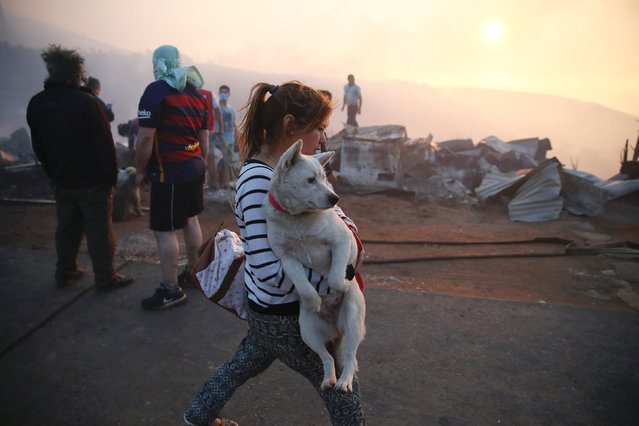 A woman holds her dog after a fire on a hill, where more than 100 homes were burned due to forest fire but there have been no reports of death, local authorities said in Valparaiso, Chile January 2, 2017. (Photo by Rodrigo Garrido/Reuters)
