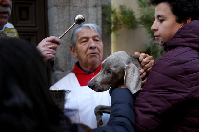 A priest blesses a dog after a mass outside San Anton Church in Madrid, Spain, January 17, 2017. (Photo by Juan Medina/Reuters)