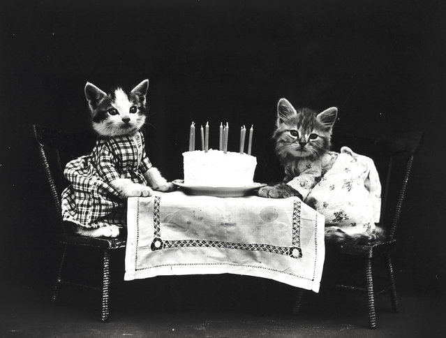 Photograph shows two kittens wearing dresses at a table with a birthday cake, 1914. (Photo by Harry Whittier Frees/Library of Congress)