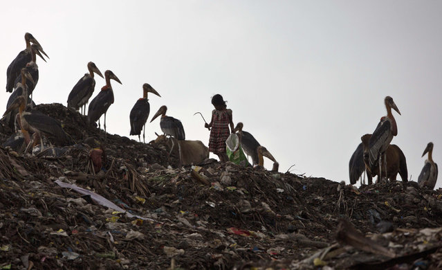An Indian girl looks for recyclable materials near resting greater adjutant storks at a dumping site on the outskirts of Gauhati, India, Wednesday, April 22, 2015. (Photo by Anupam Nath/AP Photo)