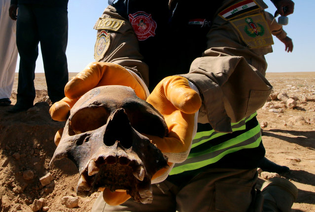 An Iraqi member of the Civil Defense shows a human skull from an unearthed mass grave of Kurds in west of the city of Samawa, Iraq on April 14, 2019. (Photo by Essam al-Sudani/Reuters)