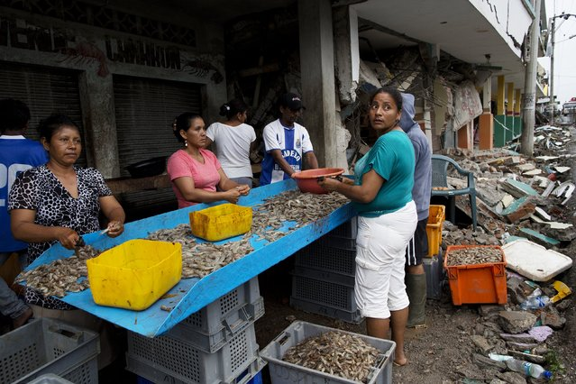 Residents clean shrimp to sell one week after the devastating earthquake on the outskirts of Pedernales, Ecuador, Saturday, April 23, 2016. The earthquake damage has added to the already heavy economic hardships being felt in this OPEC nation because of a collapse in world oil prices. Before the quake, Ecuador was bracing for a bout of austerity, with the IMF forecasting the economy would shrink 4.5 percent this year. (Photo by Rodrigo Abd/AP Photo)