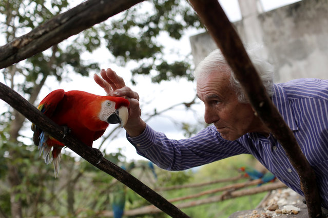 Vittorio Poggi caresses a macaw's head at his house near Caracas, Venezuela, June 18, 2019. (Photo by Manaure Quintero/Reuters)