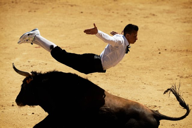 """A """"recortador"""" jumps over a bull during a bullfight in Madrid, Spain, Friday, May 2, 2014. """"Recortadores"""" is a bloodless type of bullfighting where performance consists of dodging and acrobatically leaping over a bull, and the ones who dare to get closer to the bull and show less fear are the winners. (Photo by Daniel Ochoa de Olza/AP Photo)"""