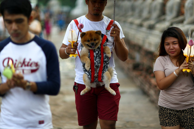 A man carries his dog as he prays during Vesak Day, an annual celebration of Buddha's birth, enlightenment and death, at Wat Yai Chai Mongkhon temple in Ayutthaya, Thailand, May 10, 2017. (Photo by Athit Perawongmetha/Reuters)