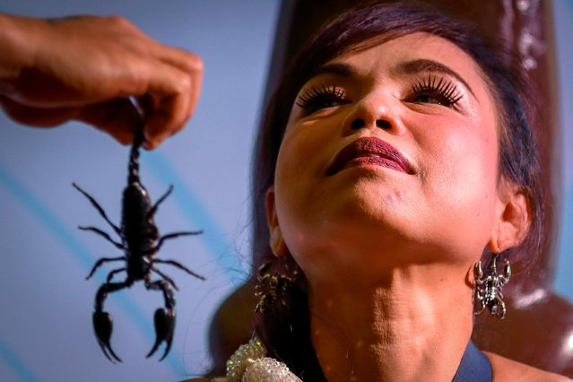 Thailand's Scorpion Queen and Ripley's Ambassador Kanchana Kaetkaew (also spelled Kanjana Ketkaew), looks on as her husband Boonthawee Seangwong (unseen) hand her a scorpion which she will keep in her mouth at the Ripley's Believe it or Not museum in Pattaya city, Chonburi province, Thailand, 03 June 2017. (Photo by Diego Azubel/EPA)