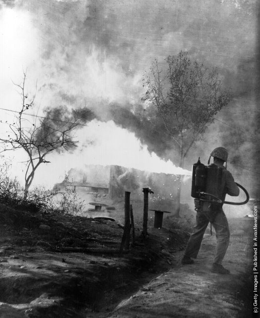 A US Marine (of the 1st Marine Division) uses a flame-thrower to burn out positions which could conceal North Korean snipers during the Korean War, 1952
