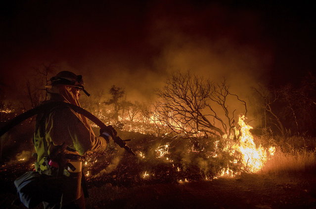 Firefighter Kern Kunst battles the Wall fire near Oroville, Calif., on Saturday, July 8, 2017. According to CalFire, the blaze has scorched 1,000 acres and destroyed 10 homes. (Photo by Noah Berger/AP Photo)