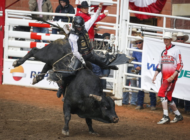 Sage Kimzey, of Strong City, Okla., rides Night Moves to win the bull riding rodeo finals at the Calgary Stampede in Calgary, Alberta, Sunday, July 16, 2017. (Photo by Jeff McIntosh/The Canadian Press via AP Photo)