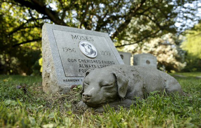 "A ceramic dog sleeps next to the gravesite of ""Moses"" at the Aspin Hill Memorial Park in Aspen Hill, Maryland August 25, 2015. (Photo by Gary Cameron/Reuters)"