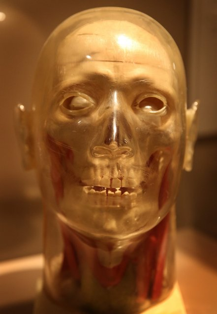 A manufactured plastic skull from 1950 is displayed at the Death: A Self-portrait exhibition at the Wellcome Collection on November 14, 2012 in London, England. The exhibition showcases 300 works from a unique collection by Richard Harris, a former antique print dealer from Chicago, devoted to the iconography of death. The display highlights art works, historical artifacts, anatomical illustrations and ephemera from around the world and opens on November 15, 2012 until February 24, 2013.  (Photo by Peter Macdiarmid)