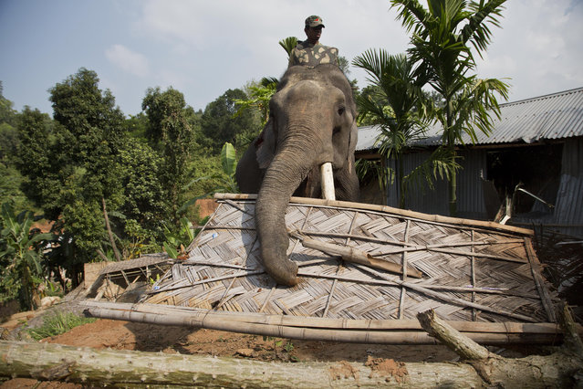 An elephant is used to demolish a house during an eviction drive inside Amchang Wildlife Sanctuary on the outskirts of Gauhati, Assam, India, Monday, November 27, 2017. Indian police on Monday took the unusual step of using elephants in an attempt to evict hundreds of people living illegally in the protected forest area in the country's remote northeast. Police used bulldozers and the elephants in a show of force, and the forest dwellers responded by hurling rocks. (Photo by Anupam Nath/AP Photo)