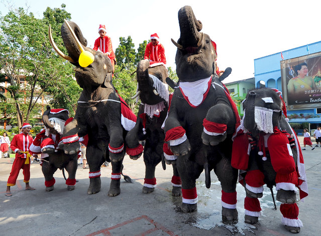 Elephants dressed in Santa Claus costumes perform before giving out gifts to students to mark the Christmas season at a school in Ayutthaya province on December 24, 2010. The event was held as part of a campaign to promote Christmas in Thailand.    AFP PHOTO / PORNCHAI KITTIWONGSAKUL (Photo credit should read PORNCHAI KITTIWONGSAKUL/AFP/Getty Images)