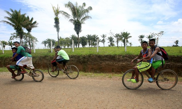 Colombian Nukak Maku Indian youths ride bicycles in San Jose del Guaviare of Guaviare province, September 4, 2015. (Photo by John Vizcaino/Reuters)