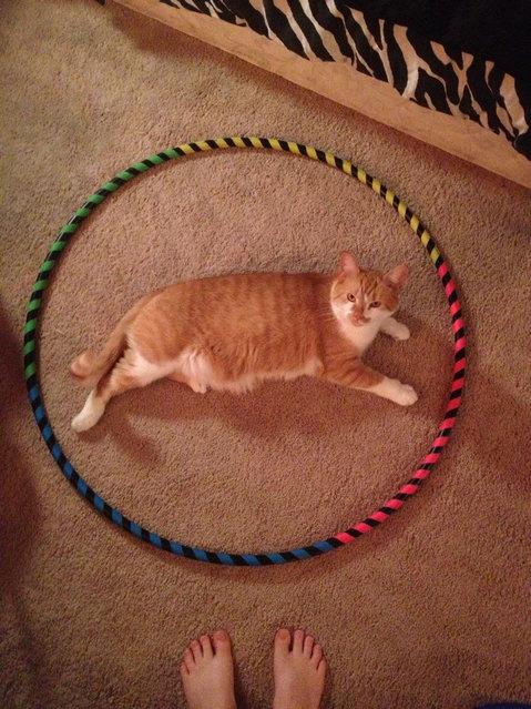 New Internet Sensation - Cat Circles