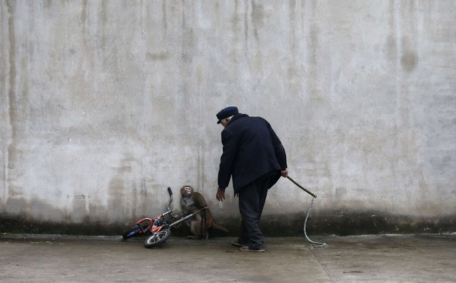 A monkey cowers as its trainer Qi Defang approaches during training for a circus in Suzhou, Anhui province, November 29, 2014. Suzhou is known as the hometown of circus troupes in China and has more than 300 circus troupes. (Photo by William Hong/Reuters)