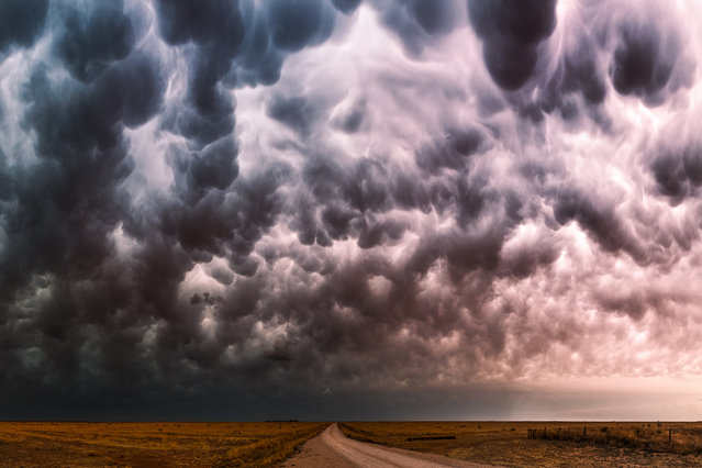 Mammatus clouds glow various colors over a dirt road in Friona, Texas during a severe thunderstorm in May, 2014. (Photo by Mike Mezeul II/Caters News)