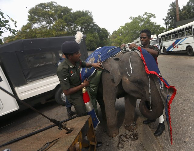 Two army soldiers remove cloth from an elephant after participating in a rehearsal for Sri Lanka's 67th Independence Day celebrations in Colombo  February 2, 2015Dinuka Liyanawatte