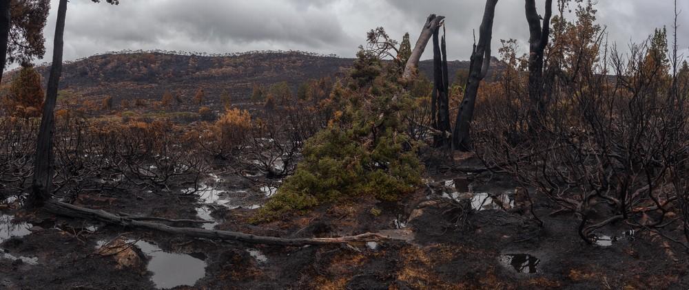 Tasmanian Fires