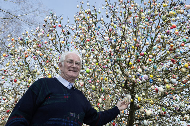 Pensioner Volker Kraft stands next to an apple tree decorated with approximately 10,000 Easter eggs on the property of pensioner Volker Kraft on March 25, 2015 in Saalfeld, Germany. Kraft and his wife have been decorating the tree since the early 1990s, initially with only a few hundred eggs but more annually ever since. In recent years the tree has become a tourist attraction that draws thousands of visitors in the weeks before Easter. (Photo by Jens Schlueter/Getty Images)