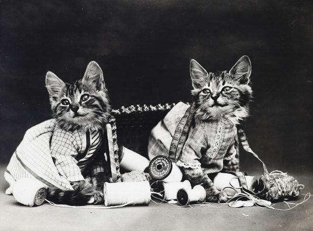 Photograph shows two kittens wearing dresses with an overturned sewing basket, 1914. (Photo by Harry Whittier Frees/Library of Congress)
