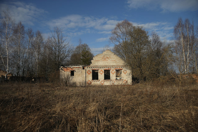 The remains of a house stand at the site of the raized village of Akshynka on April 4, 2016 near Chachersk, Belarus. Akshynka was among hundreds of villages in Belarus demolished by authorities and the residents evacuated following radiation contamination from the Chernobyl nuclear disaster in 1986. Chachersk, located in south-eastern Belarus, is in a zone designated as still contaminated to varying degrees with Chernobyl radiation, especially caesium-137. (Photo by Sean Gallup/Getty Images)