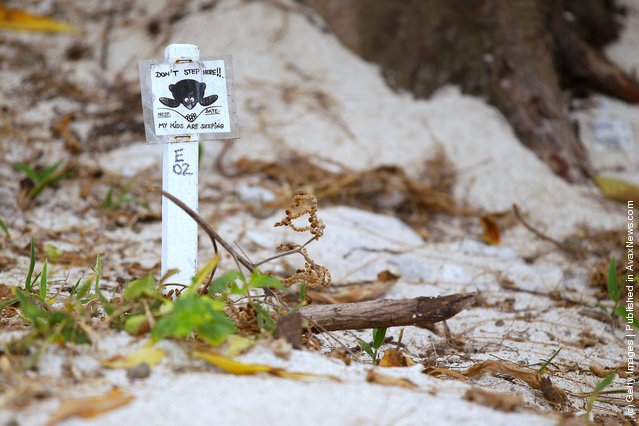 A sign marking a sea turtle nest is seen on the beach at Lady Elliot Island, Australia