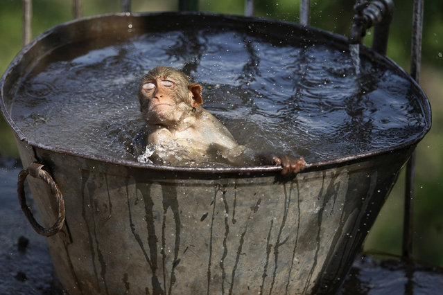 A monkey cools off in a water tub in the premises of a Hindu temple on a hot summer afternoon in Jammu, India, Wednesday, June 11, 2014. Severe heat conditions are prevailing across northern India with temperatures soaring past 45 degrees Celsius (113 Fahrenheit) at several places. (Photo by Channi Anand/AP Photo)